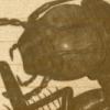 blight roach